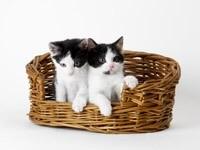 Двое котят в плетеной корзине