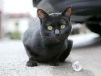 Черный кот и шарик