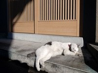 Кот спит на бетоне