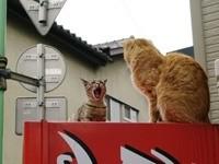Мяукающие коты