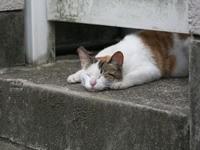 Кот спит под дверью