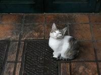 Котенок сидит на плитке