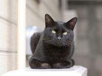 Черный кот на подоконнике