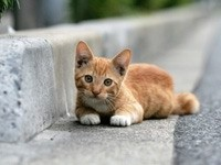 Рыжий котенок  у  бордюра