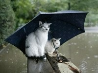 Кошачья парочка под зонтиком