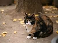 Кот в осеннем саду