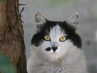 Кот возле дерева