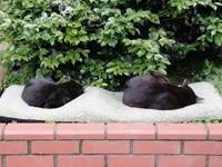 Два клубочка спят в саду