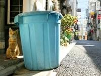 Кот возле мусорного бака