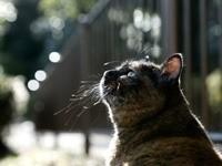 Усатый котяра смотрит вверх