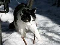 Котик ходит по снегу
