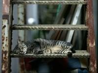 Кот спит на ступеньках