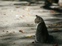 Одинокий котенок на асфальте