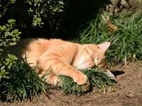Кот спит в траве