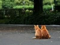 Пара котов в саду