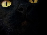 Желтые глаза черного кота