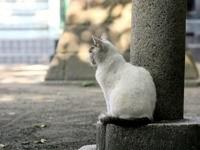 Белая кошка сидит у столба