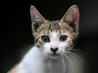 Любопытный взгляд кошки