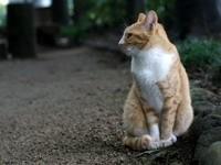 Рыжий кот на дорожке, в саду