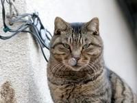 Кот с насморком