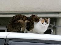 Две кошки на машине