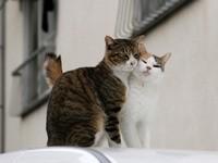 Пара котов