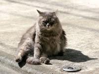 Котик сел на дороге
