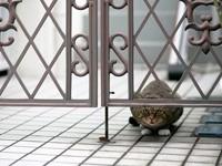 Кошка под воротами