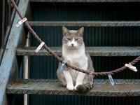 Кот сидит на ступеньках