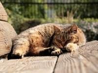 Сон кошки на деревянной лавке