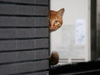 Кот выглядывает из-за угла