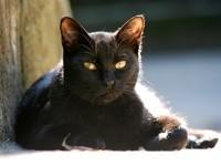 Отдых черного кота