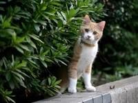 Кот в саду гуляет