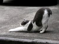 Кошка делает гимнастику
