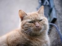 Серьезная пушистая мордочка котика
