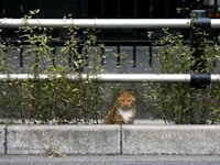 Кот за бордюром