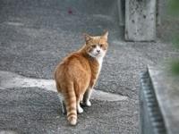 Рыжий котик оглядывается
