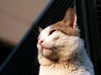 Котик смотрит вдаль