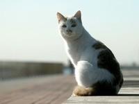 Кошка сидит на парапете