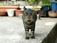 Кот шипит и злится