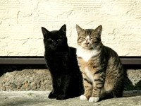 Две кошки греются на солнце