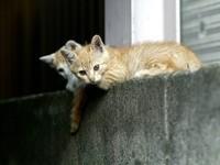 Пара котят на заборе