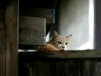 Кот на подоконнике