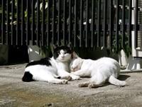 Кот охраняет сон кошки