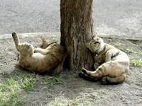 Отдых у дерева