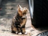 Котенок у машины