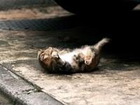 Котенок забавляется