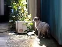 Кошка возле забора