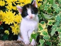 Котенок в цветущем саду