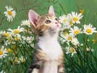 Котенок в ромашках